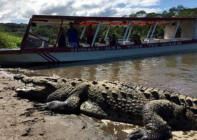 Crocodile Tarcoles Tour